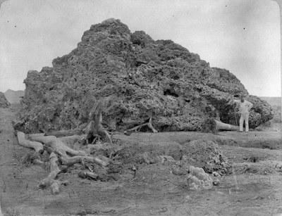 Versteinerte Lava des Krakatoa auf Java, 1885
