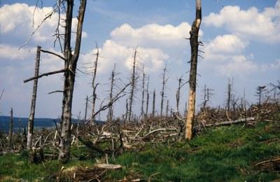 Waldsterben in den 1980er Jahren
