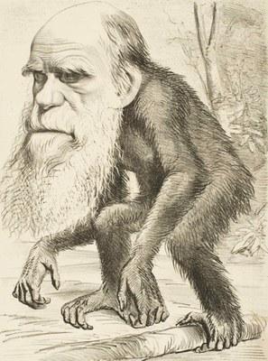 A Venerable Orang-Outang: A Contribution to Unnatural History, Karikatur von Charles Darwin (1809–1882) aus der Zeitschrift The Hornet, 1871, unbekannter Künstler; Bildquelle: Mit freundlicher Genehmigung des University College London, http://www.ucl.ac.uk/.