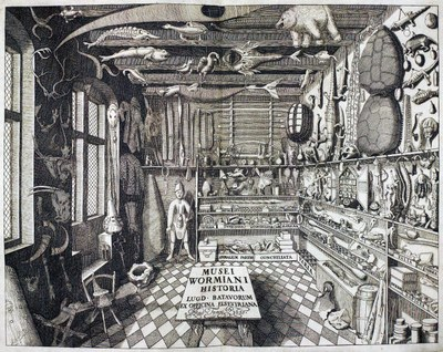 Das Museum Wormianum, Gravur, 1655, unbekannter Künstler; Bildquelle: Hansen, P.: Illustreret dansk Litteraturhistorie, Kopenhagen 1902, nach S. 394, Digitalisat: Projekt Runeberg, http://runeberg.org/ildalihi/1/0443.html.